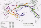 Migration of humans out of Africa, by maternal haplogroup
